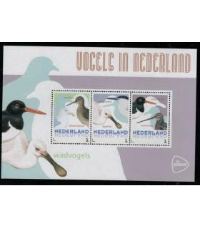 3012 D33 Vogels in Nederland Wadvogels (xx)