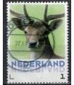 3013 Zoogdieren Damhert (o)