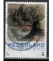 3013 Zoogdieren Watervleermuis (o)