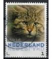 3013 Zoogdieren Wilde Kat (o)