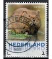 3013 Zoogdieren Woelrat (o)