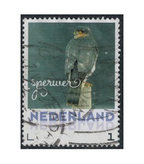 2017 Wintervogels Sperwer (o)