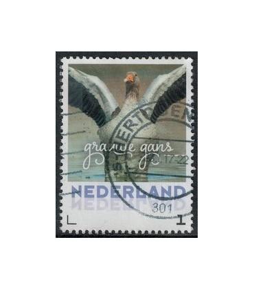 2017 Wintervogels Grauwe Gans (o)