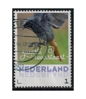 2017 Lentevogels zwarte roodstaart (o)