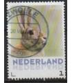3013 Zoogdieren Konijn (o)