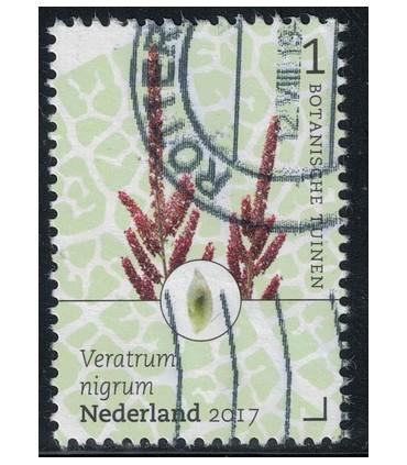 3529 Botanische Tuinen nieswortel (o)