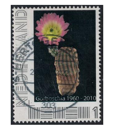 Gorboschia (o)