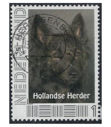 Hollandse Herder (o)
