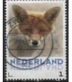 3013 Zoogdieren vos (o)