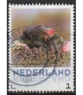 3013 Zoogdieren Mol (o)