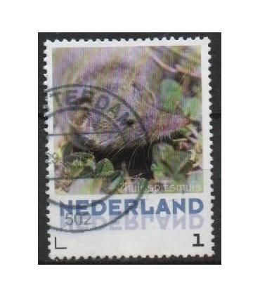 3013 Zoogdieren Huisspitsmuis (o)