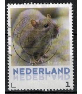 3013 Zoogdieren Bruine rat (o)