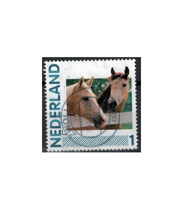 2791 Ha-41 Paarden (o)