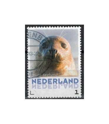 3013 Zoogdieren grijze Zeehond (o)